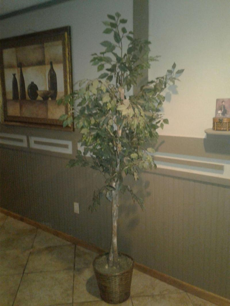 Fake Indoor Trees For Sale In North Richland Hills Tx 5miles Buy And Sell